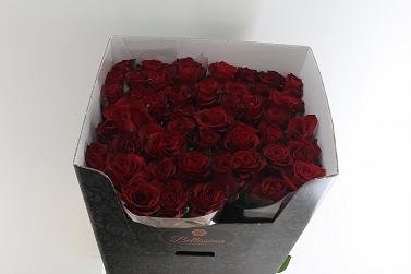 aefab085b3bf9f Róża ever red 80/50 bellissima